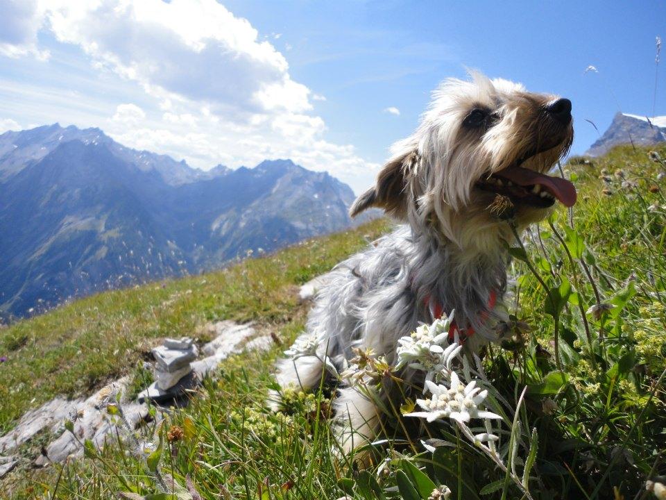 alimentation chien senior