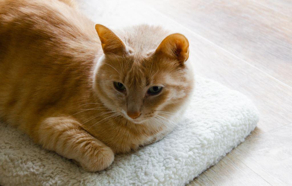 alimentation naturelle chat sans cereales