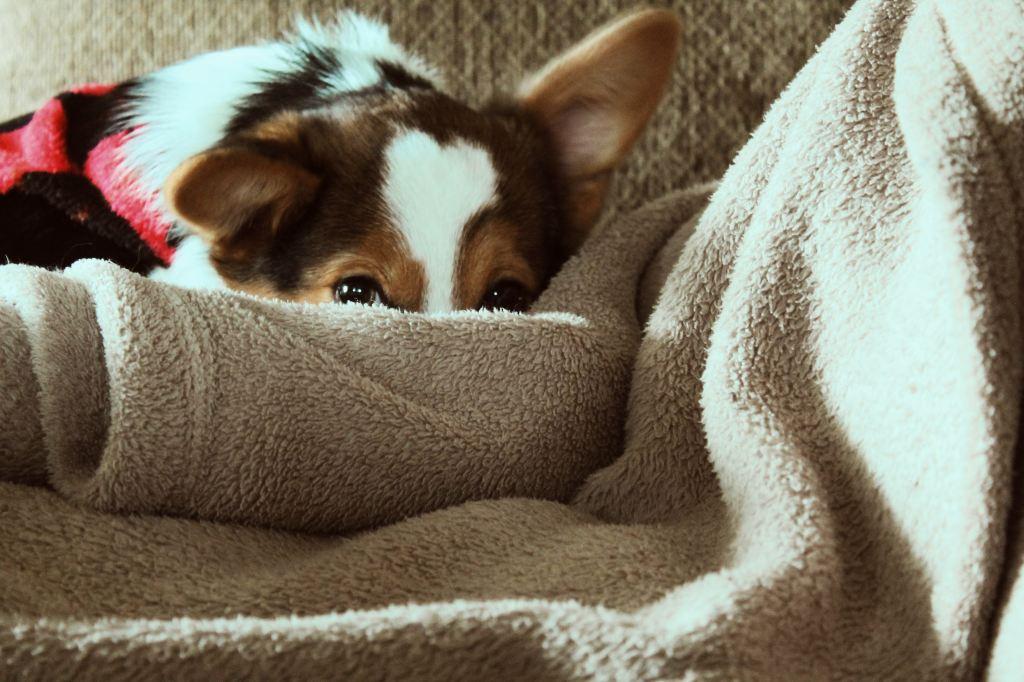 chien malade diarrhee