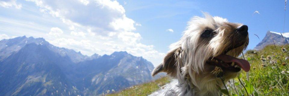 Alimentation naturelle pour chat et chien en Suisse