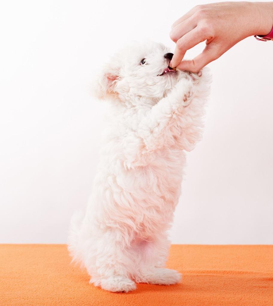 croquettes naturelles chien