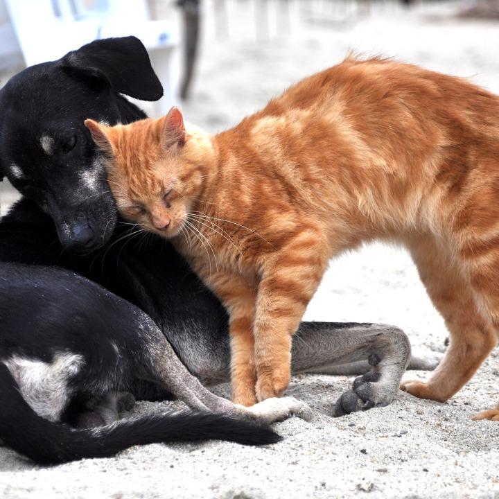 chien et chat calin