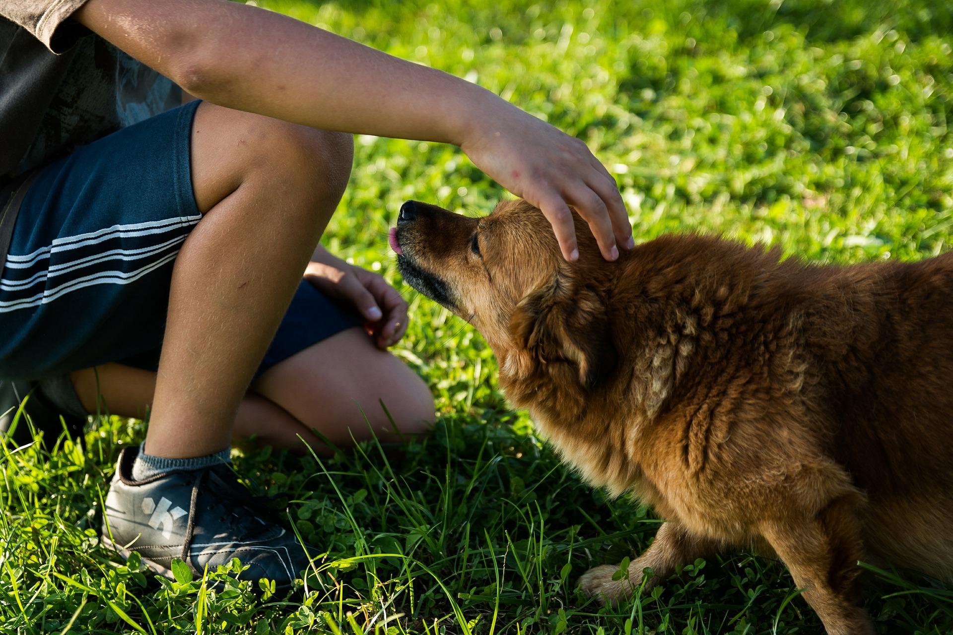 alimentation chien suisse