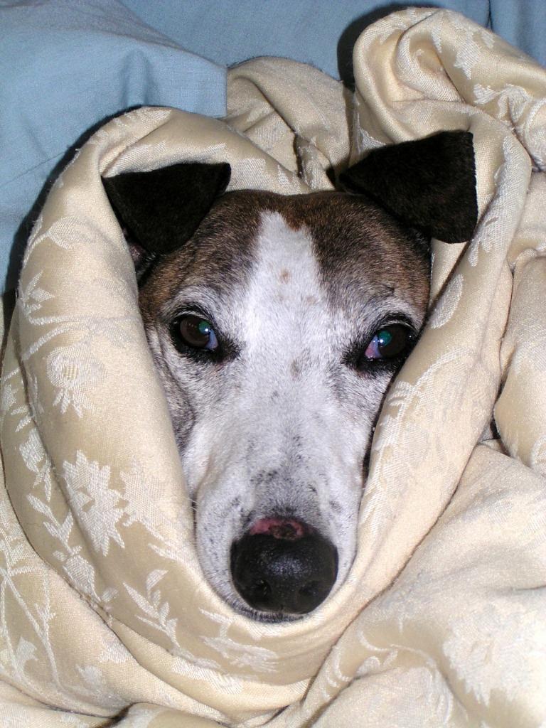 diarrhee chien que faire ?