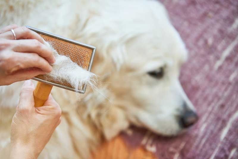 mue chien remede levure biere