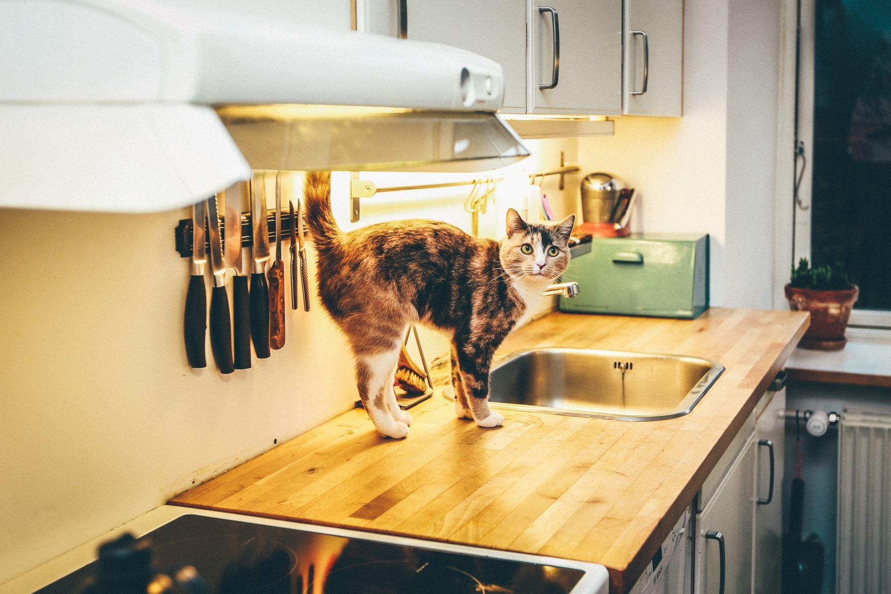 cuisiner pour son chat