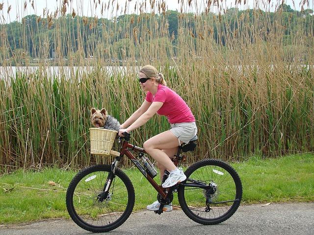 sport chien vélo
